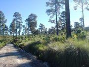 Camino Sierra de las Navajas