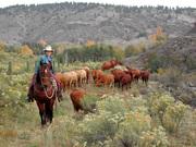 Sylvan Dale Guest Ranch