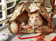 Sewing Projects for Pets