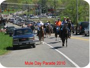 Mustang Ranch Riders
