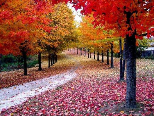 árvores_floridas