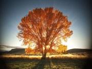 Outono  França