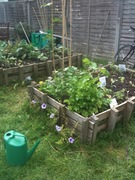 Moishe House Allotment (looking for new growers)