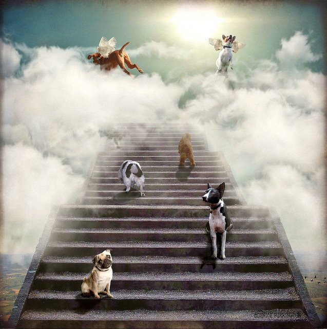 animais no céu!