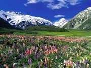 montanhas-e-flores