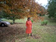Orange/White Polka Dot  Shirt wasit dress