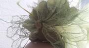 Green Goddess - back