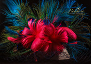 Peacock Feather Fascinator with Fuscsia Contrast
