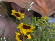 ... apa de stele pe florile mele...