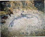 Mesozoic : Days of the Dinosaurs