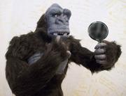 Balding Kong