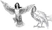 Character Design - Harpies