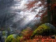 Luz y Naturaleza
