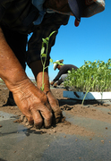 Biodynamic & Organic Growers