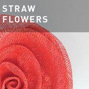 35 - STRAW FLOWERS