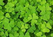 Green Renters