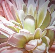 Chrysanthemum Joy