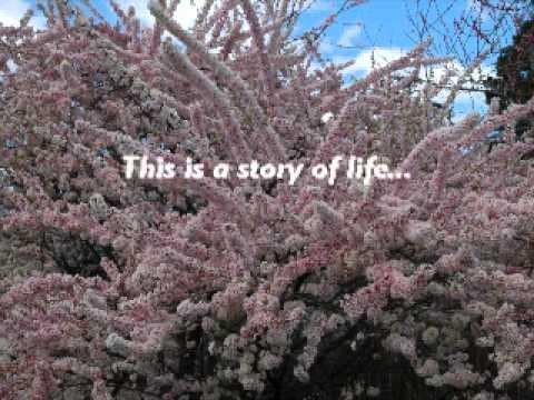 """The Soul Bearers""  book trailer"