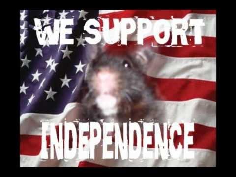Black Hamster Promotional Reel for Black Hamster TV