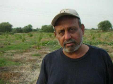 Jatropha bio diesel buy saplings grow money Pakistan  Salim Mastan  EES Farm Karachi Pakistan