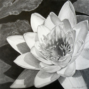 Donna's Graphite Drawings