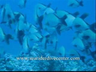 Scuba Diving in Sabang,Puerto Galera