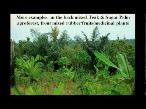 How we re-grew a Rainforest