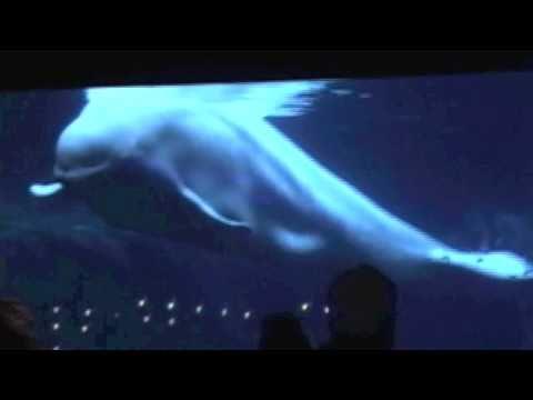 Steven Charles Band & Jonn Serrie @ Ga. Aquarium
