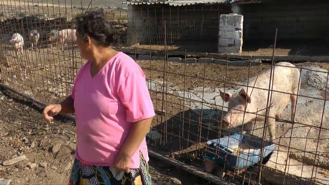 Paros videos: Bread & Cheese on a Parian Farm