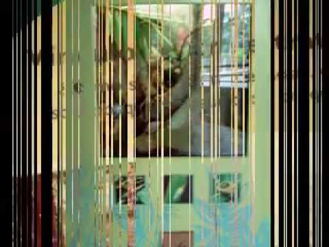 El Portal del Yunque part 2