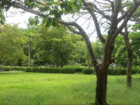 Parque Central -parte1