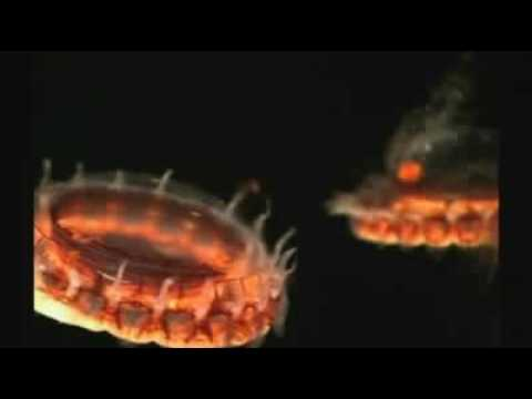 Strange creatures of the deep