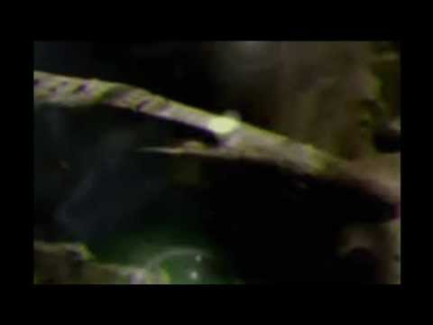 The Return of The Anunnaki - ***For The Ultimate Lightworker - The Warriors on the Front Lines!!!*** - December 21, 2011