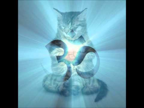 Cat Purring Meditation