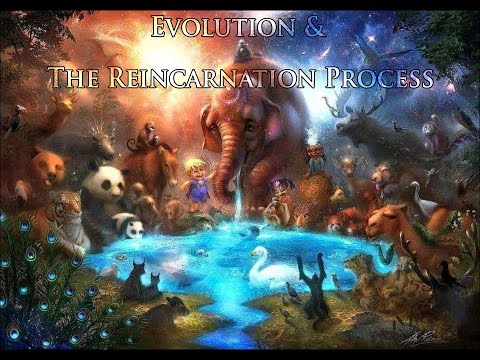 Evolution And The Reincarnation Process