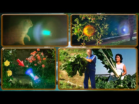 Alcyon Pleiades 30-3:Political duplicity. Photonic light in roses, spacecraft, giant plants, fairies