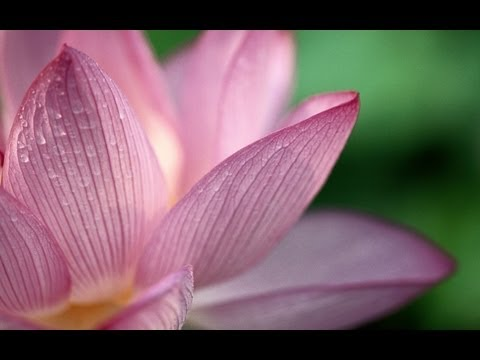 Merlin's Magic  : 1 HOUR Healing Meditation Music - REIKI HEALING - Relaxing Music [HQ]