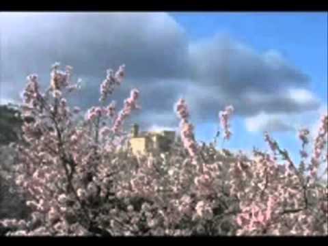 Calunga/Gasparetto  -   Pensamento e atitudes