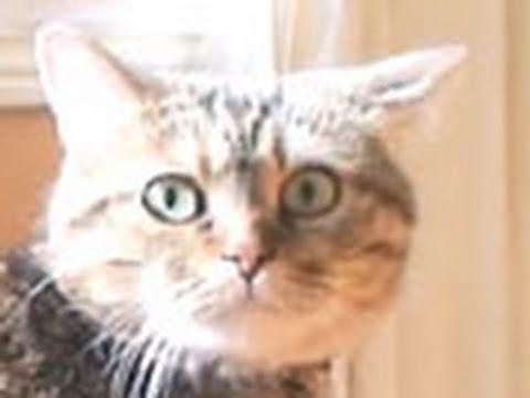 DRAMATIC CAT!!!