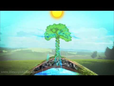 Visualization Meditation Techniques - DNA Tree Visualization