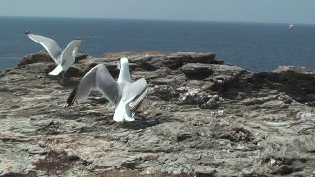 Un voyage dans le Golfe du Morbihan