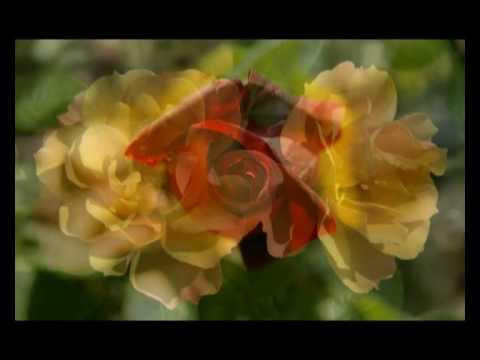 Henri Gougaud les roses de mai