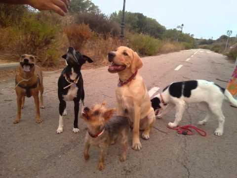 MÚSICA PARA PERROS, MASCOTAS, ANIMALES, MUSIC FOR DOGS, PETS, ANIMALS, MUSIK FÜR HUNDE