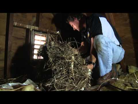 Attic Insulation Done Wrong… and How to Do It Right!