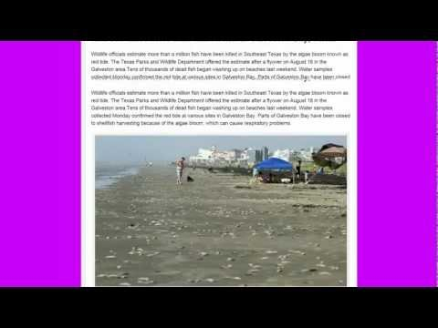 Masssive fish kill, Tens of Thousands, Galveston Bay Texas, Mrytle Beach S. Carolina