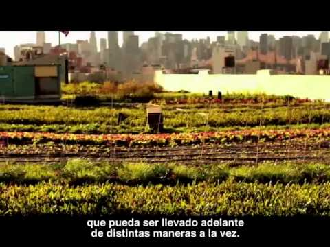 are you really doing what makes you happy? spanish subtitles
