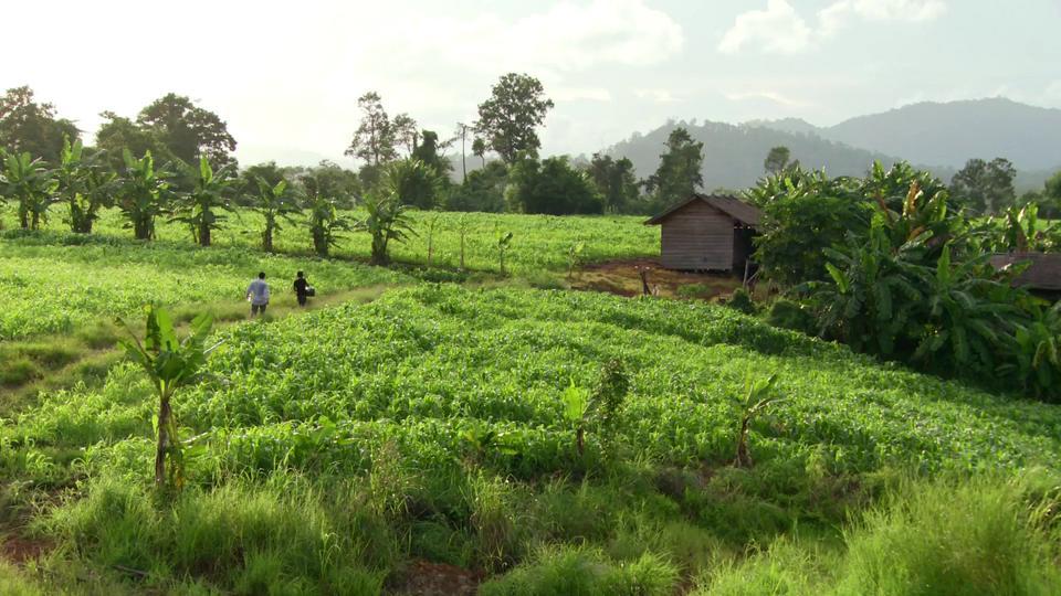 Village workers fight malaria in Pailin, Cambodia