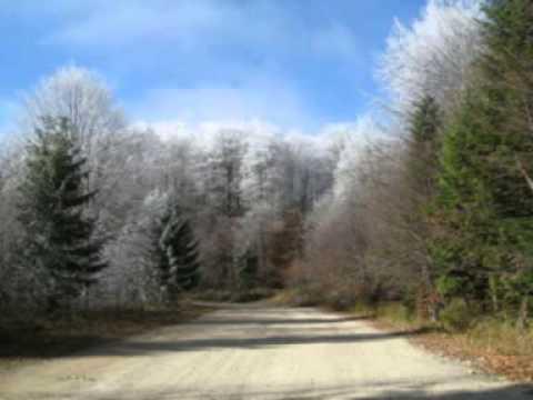 Vasilisia Lazăr Grădinariu - Peisaj Autumnal