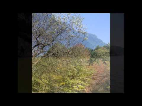 Vasilisia Lazăr Grădinariu - Iubire Muribundă