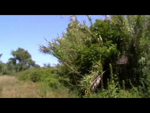 Vasilisia Lazăr Grădinariu - Târzie Floare Crizantema
